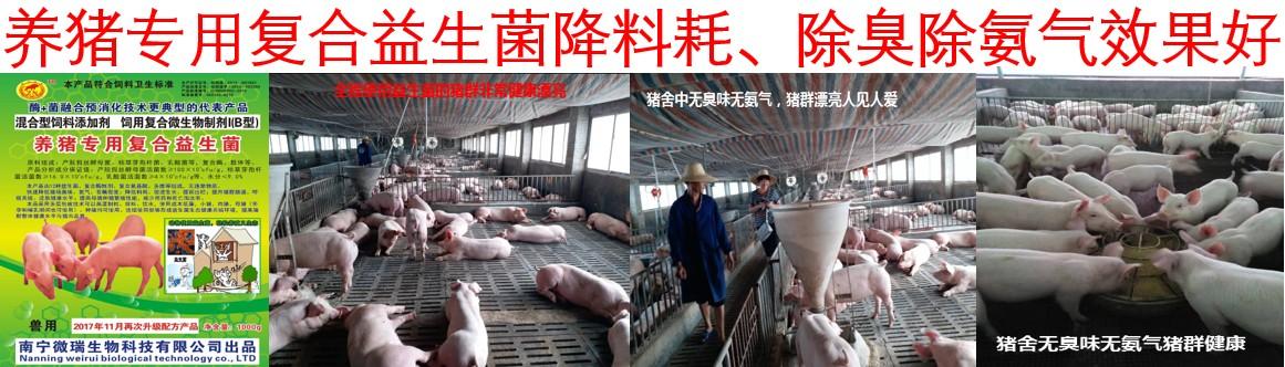 养猪专用复合益生菌:含丁酸梭菌的益生菌效果更显著成本更低
