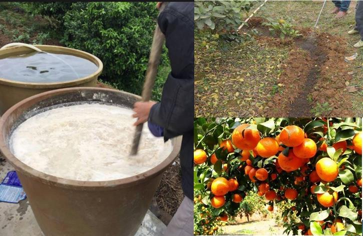 高级果蔬水肥快速发酵剂,水肥专业发酵剂,砂糖桔等高级水果专业快速肥料发酵剂