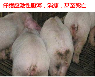 仔猪应激性腹泻1.png