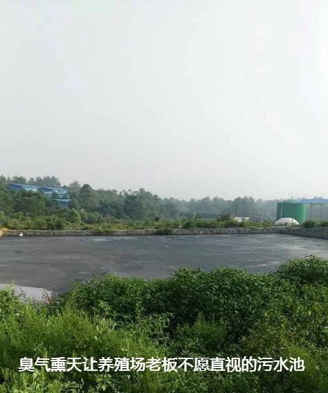 养殖场污水处理步骤8.png