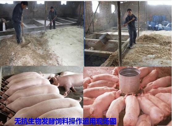 生物发酵饲料3.png