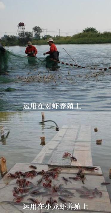 高密度水产养殖复合益生菌在养虾上的运用.jpg