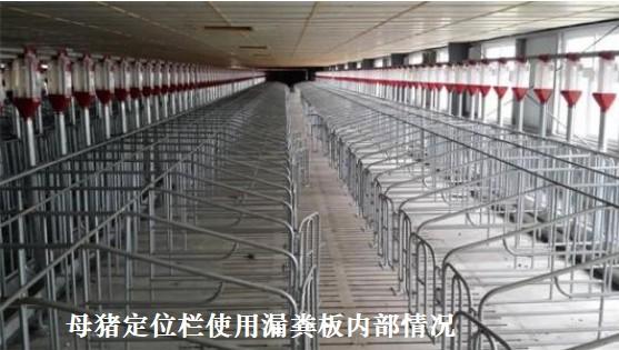 母猪定位栏使用漏粪板内部情况.jpg