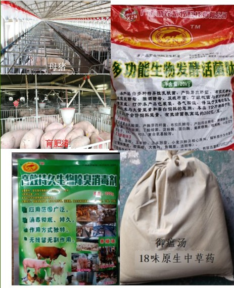自动料线防控非洲猪瘟组合产品.jpg
