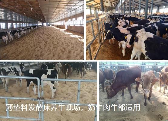 薄垫料发酵床养牛现场,奶牛肉牛都适用.jpg