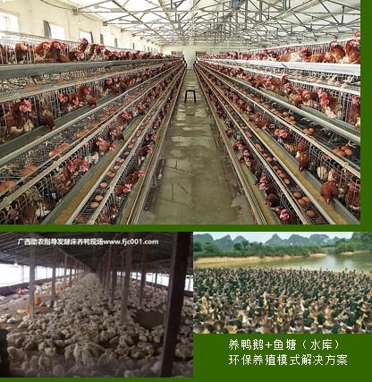 家禽养殖场设计建设2.jpg