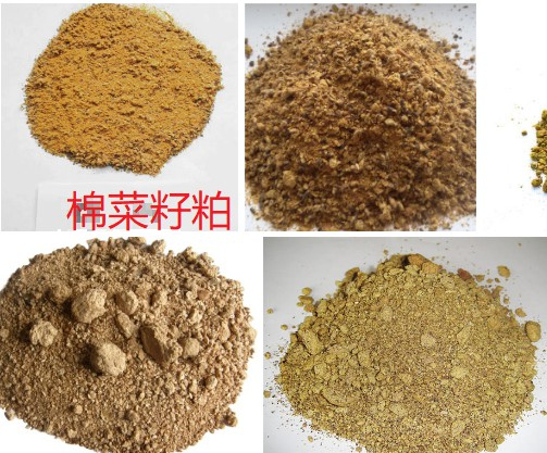 棉菜籽粕.jpg